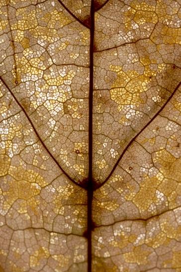 Complex Reticence